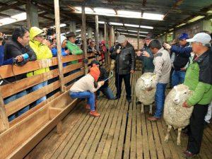 Comuneros de Cátac se capacitan en mejoramiento genético para la ganadería ovina