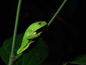 Parque Nacional del Manu cumple 45 años