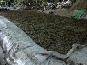 Vraem: Destruyen 10 pozas de maceración y un laboratorio de producción de cocaína