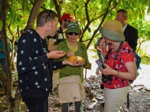 Cacao peruano en la mira de empresarios europeos y asiáticos