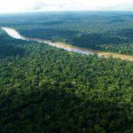Día de los Bosques Tropicales: Comunidades nativas impulsan conservación de bosques