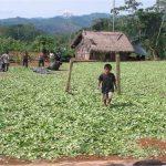 Escolares serán agentes activos en defensa del medio ambiente amazónico