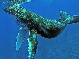 Minam realiza actividades por el Día Mundial de los Océanos