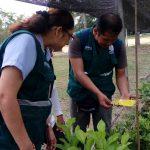 Ucayali: Refuerzan vigilancia en cultivos de limón y naranja