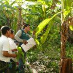 Vraem: Instruyen a pequeños plataneros en Escuela de Campo