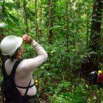 Suspenden licencia a cuatro regentes forestales