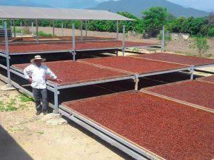 Cacao piurano es cotizado a 4 000 dólares por tonelada en Europa