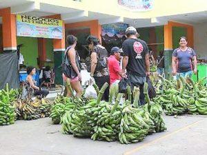 Capacitan en manejo de cultivos y exportación de plátano a productores de San Martín
