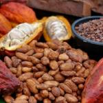 Cuatro variedades de cacao peruano con potenciales compuestos para tratamiento y prevención del asma