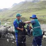 Dan atención sanitaria en comunidades altoandinas de Apurimac
