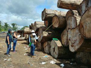 Dictan condena para traficante de madera en Madre de Dios