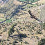 El valle del Sondondo: Refugio de cóndores