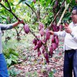 Junín: Asociación cacaotera se consolidó tras la intervención de Devida