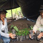 Monzón se abre al mercado de sacha inchi