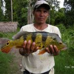 Oxapampa: Impulsan actividad pesquera en Puerto Bermúdez
