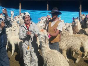 Auxilian más de 300 000 cabezas de ganado en Cusco por heladas