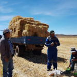 Ayacucho: Ganaderos reciben alimentos y kits veterinarios para proteger sus animales de las heladas