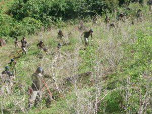Corah erradicó 18 000 hectáreas de cultivos ilegales de hoja de coca en 2018