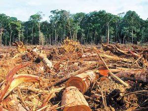 En el primer semestre de 2018 la Amazonía peruana perdió 23 000 hectáreas