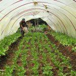 Desarrollarán ecosistema de innovación con enfoque de agro biodiversidad en San Martín