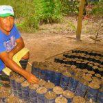 Entregan 930 kilos de semillas de cacao a productores en San Martín