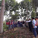 Fortalecen capacidades de agricultores de Ucayali y Huánuco en manejo de plantaciones forestales