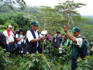 Fortalecen capacidades técnicas de cafetaleros en Huánuco