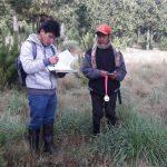 Minagri realizó inventario de plantaciones forestales en Cajamarca y Cusco