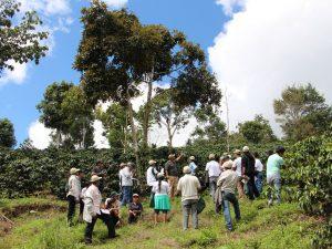 Villa Rica: Cafetaleros piuranos fortalecen capacidades en pasantía técnica