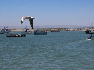 Zonas marino costeras del Perú sufren fuertes presiones por las acciones humanas