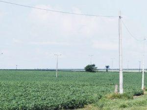 Brasil: Cultivos orgánicos van ganando espacio