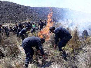 Extinguen incendio forestal en Arequipa
