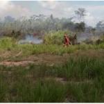 Extinguen incendios forestales en Huancavelica y Ucayali