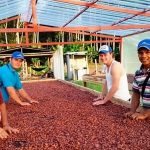 San Martín: Producción de cacao generar S/82 millones