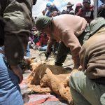 Arequipa: Primer chaccu en la Reserva Paisajística Sub Cuenca del Cotahuasi