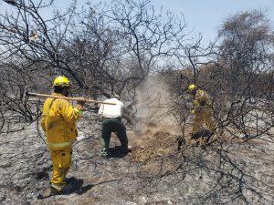 Extinguen incendio en el Santuario Histórico Bosque de Pómac