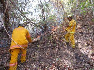 Extinguen incendio forestal en la Reserva Nacional de Tumbes