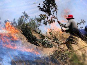 Sepa qué hacer ante un incendio forestal