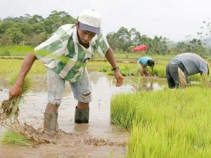 Promueven la modernización agrícola en San Martín