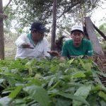 San Martín: Agricultores capacitados en manejo de viveros de cacao