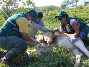 Perú implementa medidas sanitarias ante fiebre aftosa en Colombia