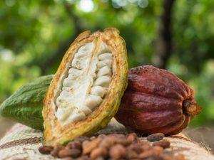 Cacao de San Martín cumple estándares de exportación establecidas por la Unión Europea