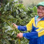 Cusco: Quillabamba será sede del Primer Foro Nacional del Café