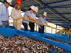 Desembarque de anchoveta registrado en noviembre es el más alto desde 2013