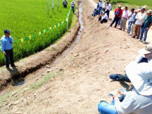 Lambayeque: Productores conocen nueva tecnología para mejorar calidad y rentabilidad del arroz