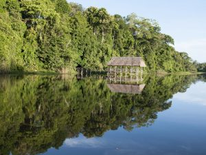 Parque Nacional Cordillera Azul y Reserva Comunal Amarakaeri ingresan a Lista Verde