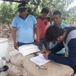 San Martín: Mejorarán producción de cacao con aplicación de nuevos insumos