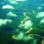Serfor lidera actividades por la Semana Forestal Nacional 2018