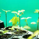 Ucayali: Siembran más de 26 mil plantones forestales en la provincia de Padre Abad