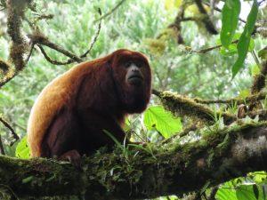 Tres nuevas Áreas de Conservación Privada son reconocidas en Madre de Dios, Cajamarca y Amazonas